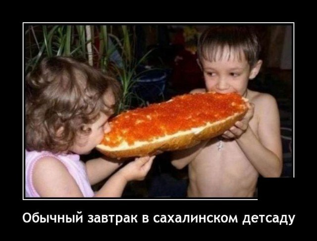 208581_13_trinixy_ru.jpg