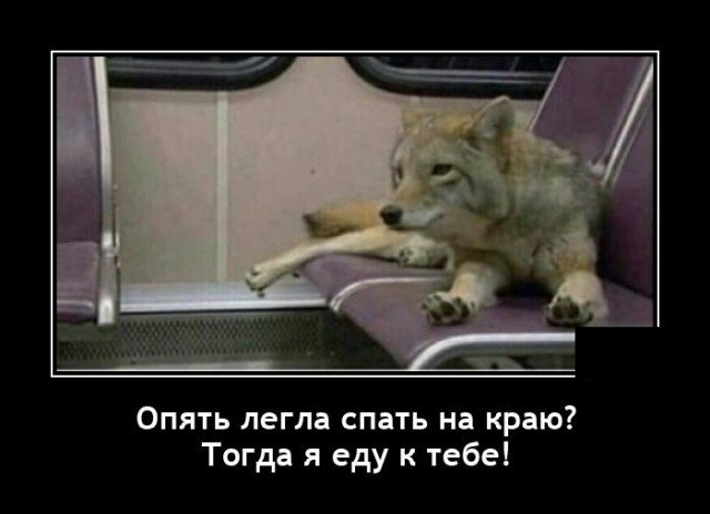 208581_2_trinixy_ru.jpg