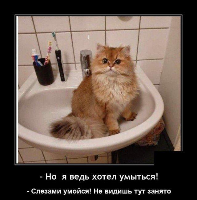 208581_9_trinixy_ru.jpg
