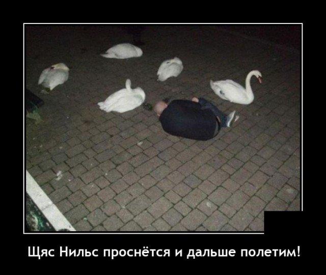 Демотиватор про лебедя