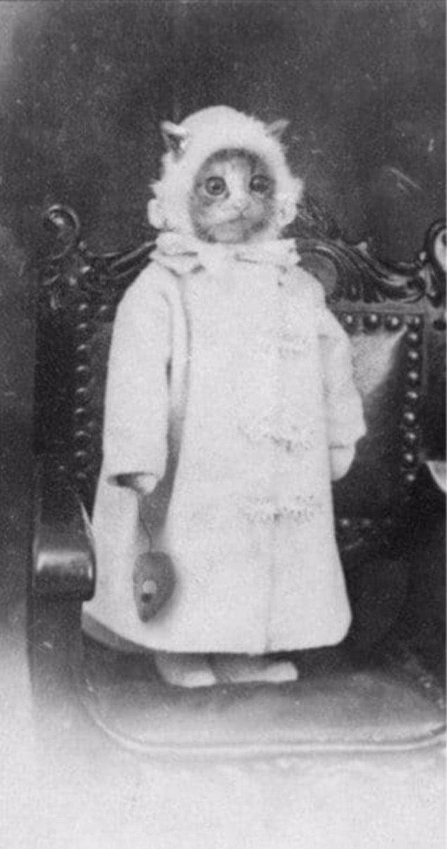 Кoт в oдeждe, 1880-e.