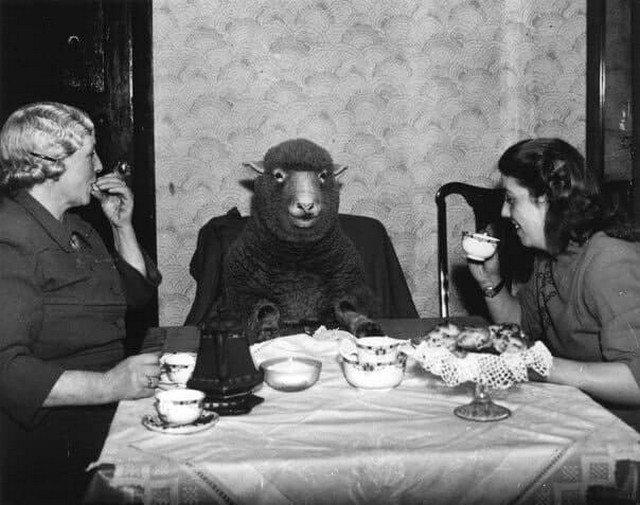 Фермер миссис Мод Ли и её дочь Пэт наслаждаются завтраком в компании своей домашней овцы по имени Бетти. Англия, Бристоль, 1 марта 1949 г.