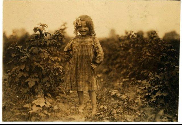 Лора Петти, 6-летняя сборщица ягод на ферме Дженкинс, Рок Крик вблизи Балтимора, штат Мэриленд, 1909 год.
