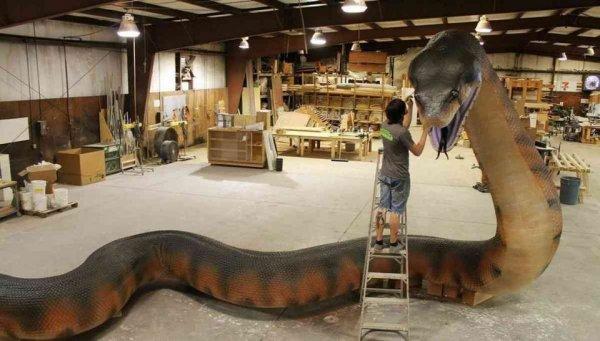 Реплика вымершей змеи титанобоа, жившей на Земле 58-60 млн лет назад