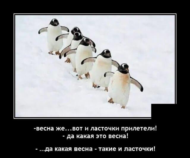 Демотиватор про пингвинов