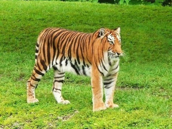 Немного странного юмора: как бы выглядели животные, не будь у них шеи