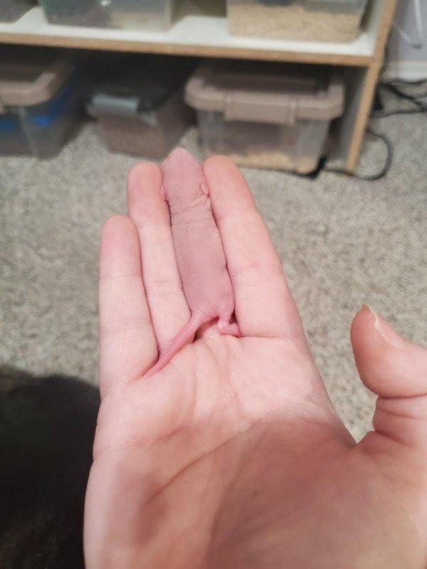 Маленький живой палец
