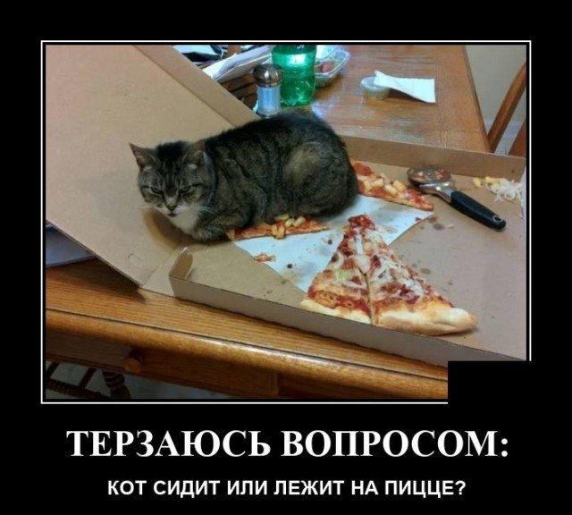 Демотиватор про кота и пиццу