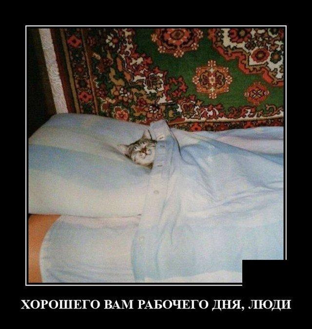 209171_15_trinixy_ru.jpg