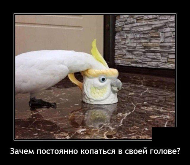 209233_13_trinixy_ru.jpg