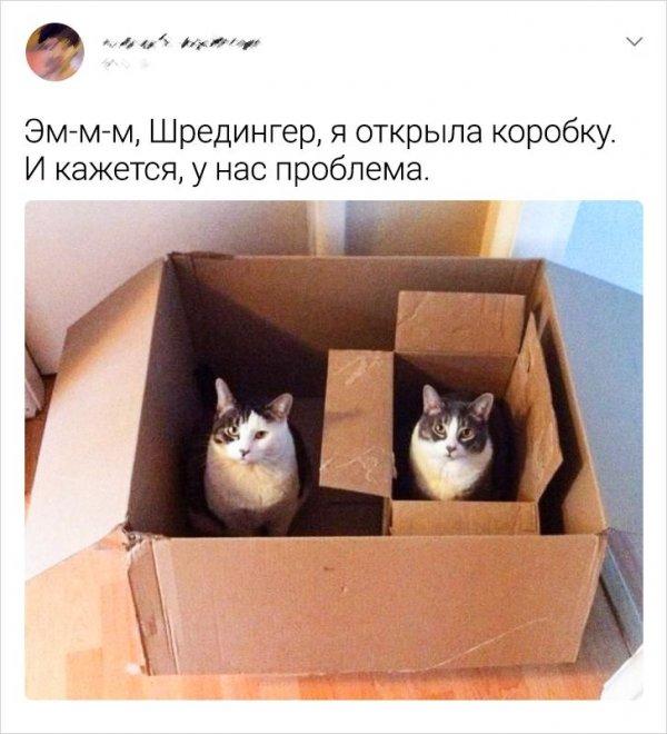 твит про коробку
