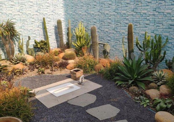 Этот открытый туалет в Китае одновременно является и кактусовым садом