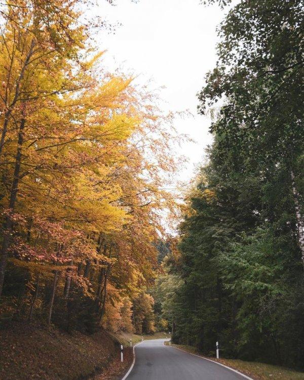 Осень еще не перешла дорогу