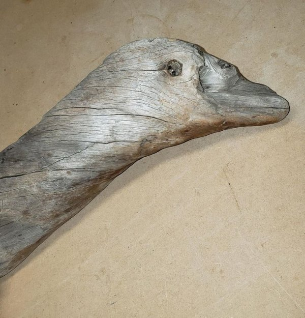 Нашел корягу, которая невероятно похожа на гуся