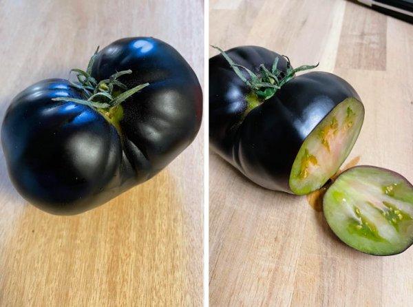 Думали, что это странный баклажан? Нет, это помидор