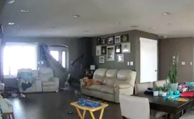 Пес устроил погром, пока хозяев не было дома - и его сняла камера наблюдения