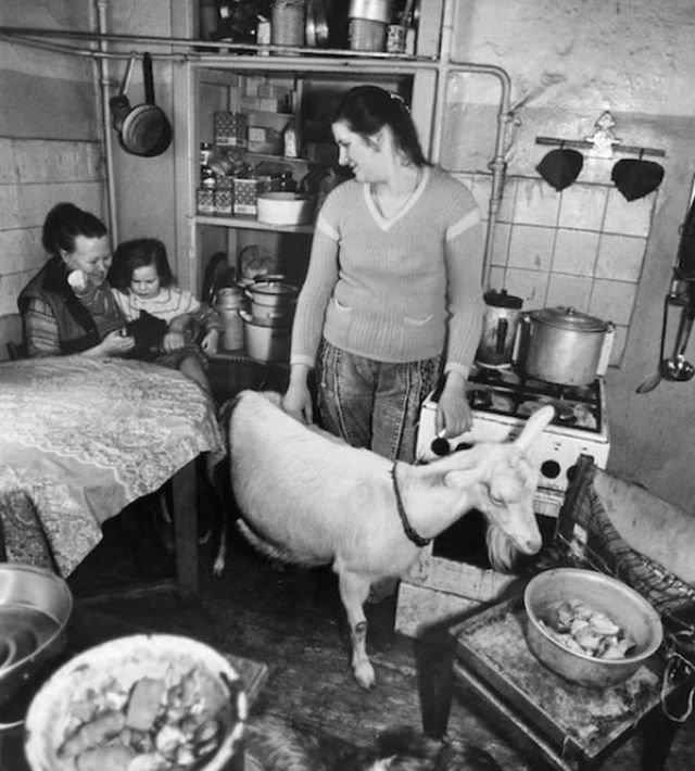Коза в коммунальной квартире, 1992 год, Москва.