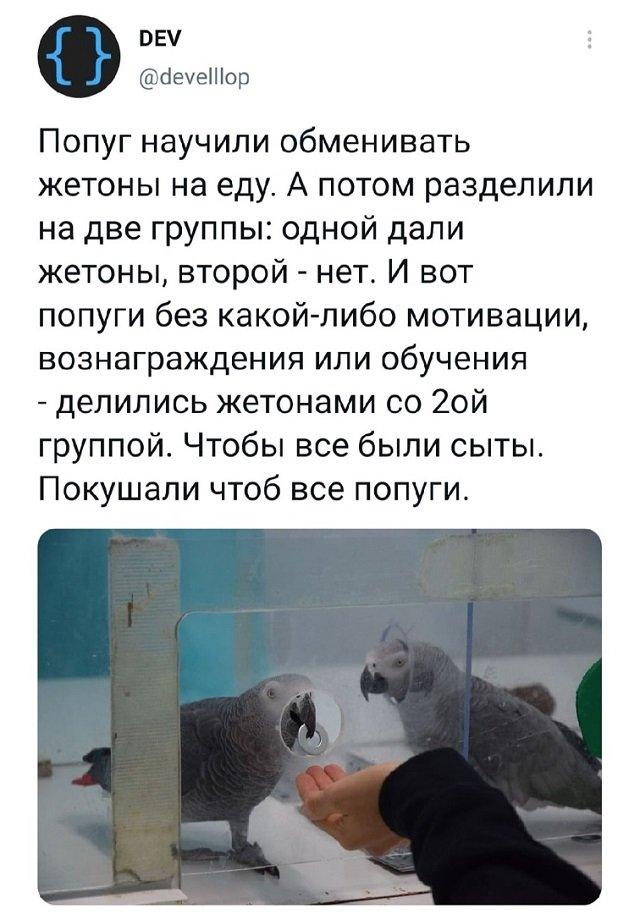 твит про попугаев