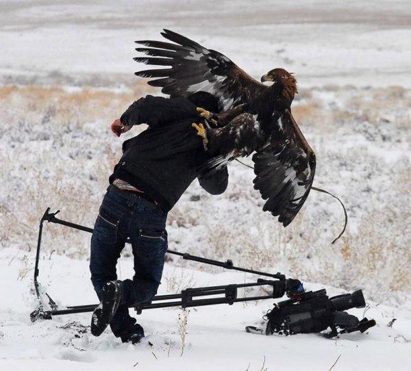 Орёл против папарацци