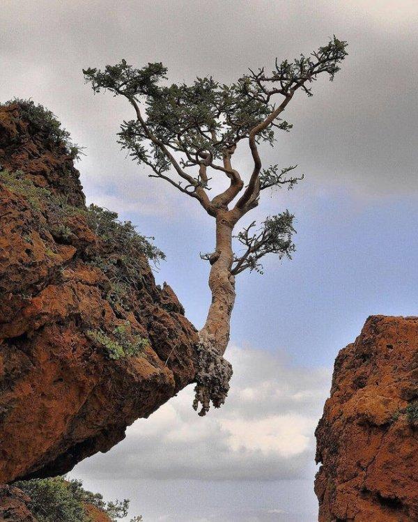 Рисковое дерево