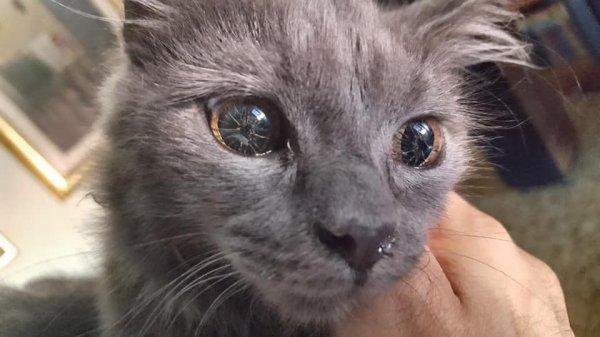 У моей кошки генетическая мутация, из-за которой её глаза выглядят странно, но зрение у неё идеальное