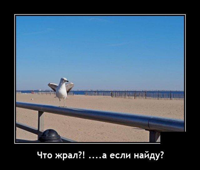 Демотиватор про чайку