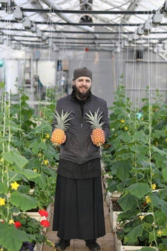 В Валаамском монастыре послушники вырастили экзотический фрукт