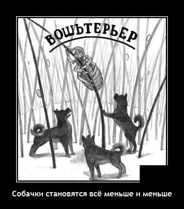 Демотиватор про собак