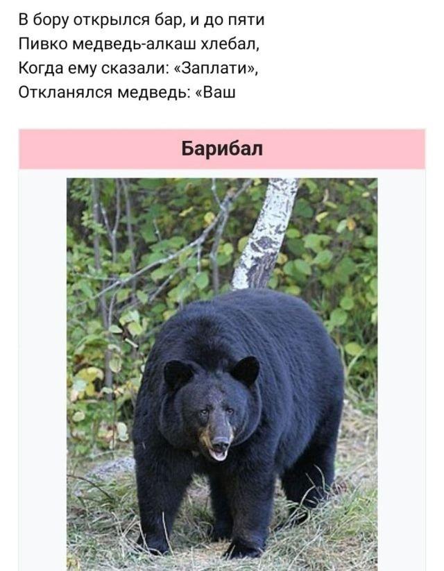стих про медведя
