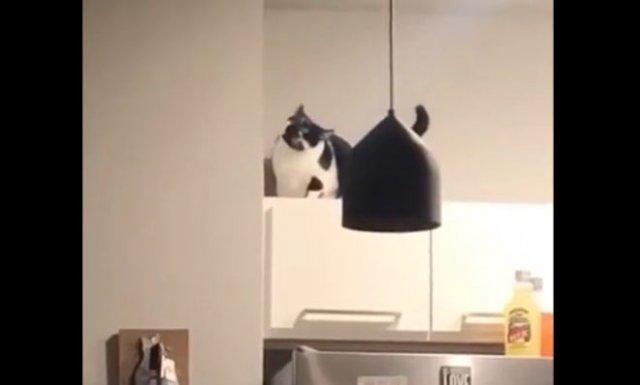 """Кот, который """"сломался"""""""