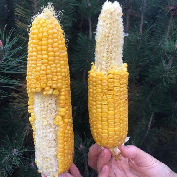 Кукурузный вопрос