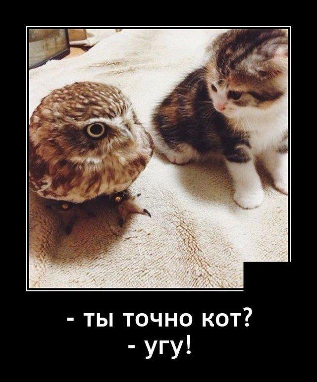 Демотиватор про кота и сову