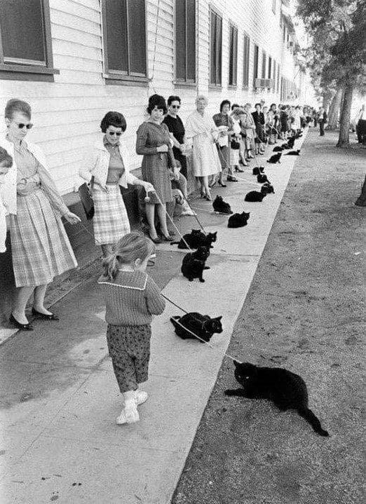 """Кастинг черных котов для фильма ужасов """"Истории ужаса"""", Голливуд 1961 год."""
