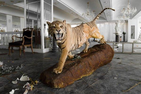 Тигр в заброшенном поместье японского миллиардера