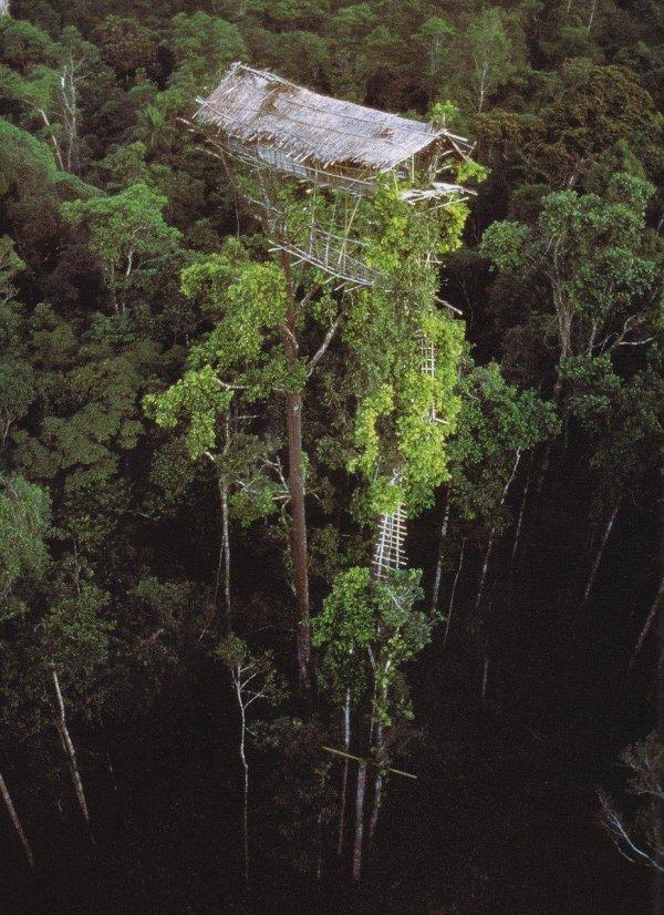 Заброшенный дом коренных жителей Папуа-Новой Гвинеи