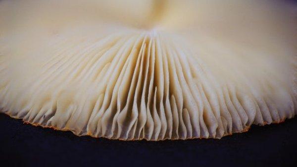 Шляпка гриба