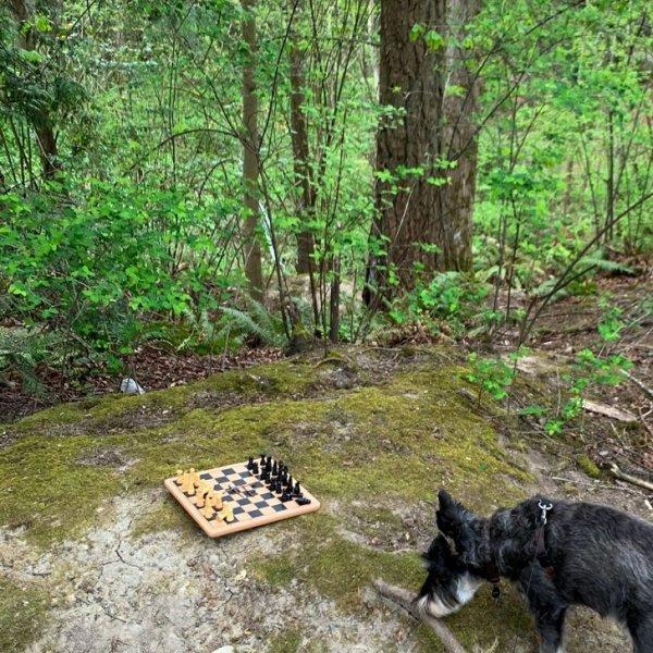 Парень гулял с собакой и наткнулся на разложенные на доске шахматы