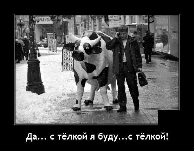Демотиватор про корову