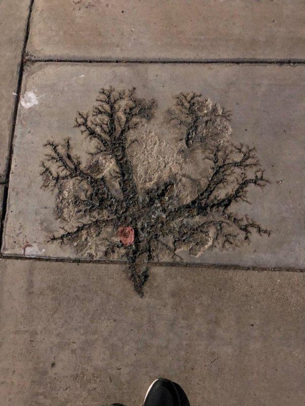 Вот что бывает, когда молния бьёт в бетонный тротуар