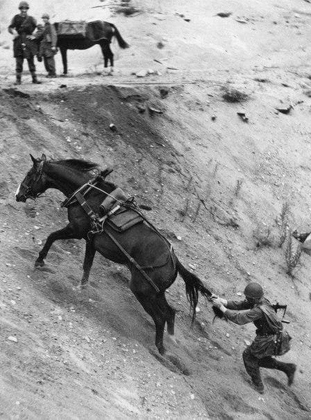 Кавалерист пытается остановить свою лошадь. Швеция, 1952 год