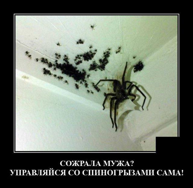 Демотиватор про пауков
