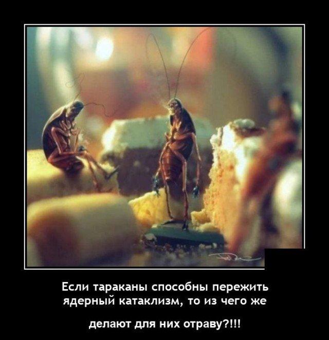 Демотиватор про тараканов