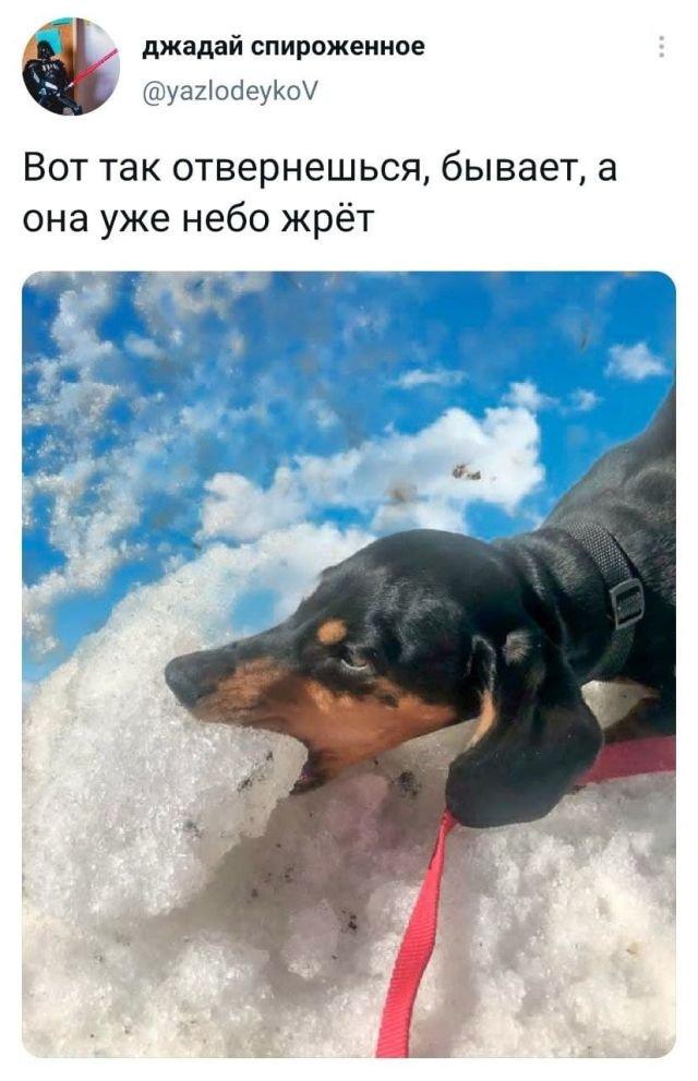 твит про небо