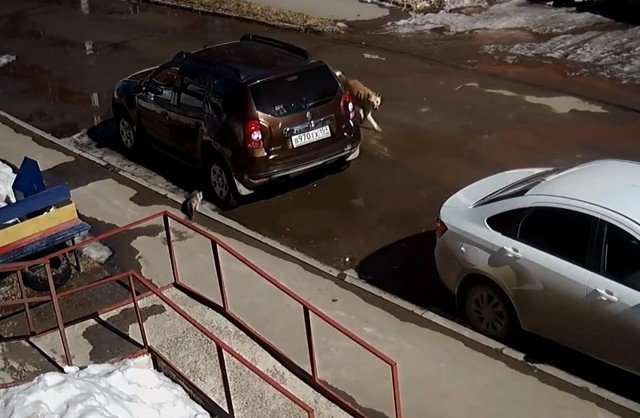 Стая бродячих собак напала на кошку