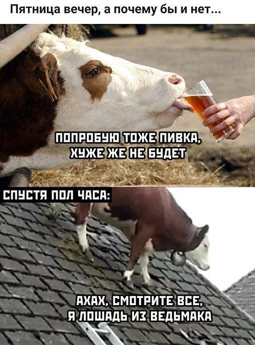Приколы про алкоголь после выходных