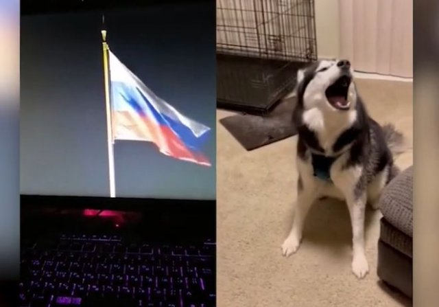 Хаски выучил гимн России