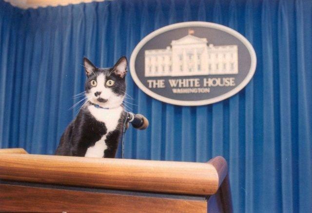Кот президента Клинтона занял подиум пресс-секретаря в Белом доме, 1993 год.