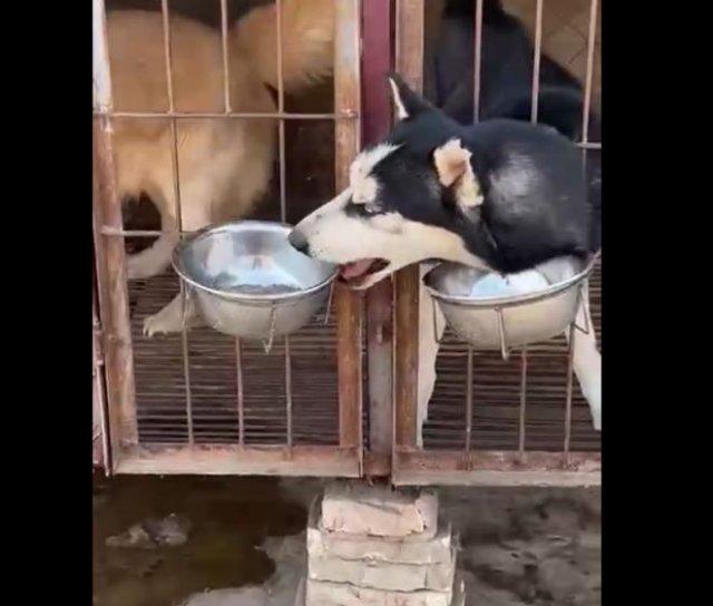 Невероятно наглый пес, который забирает у всех воду и еду и кидается мисками