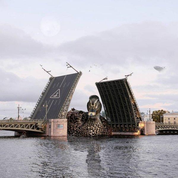 Мосты разводят для гигантских гм-уток