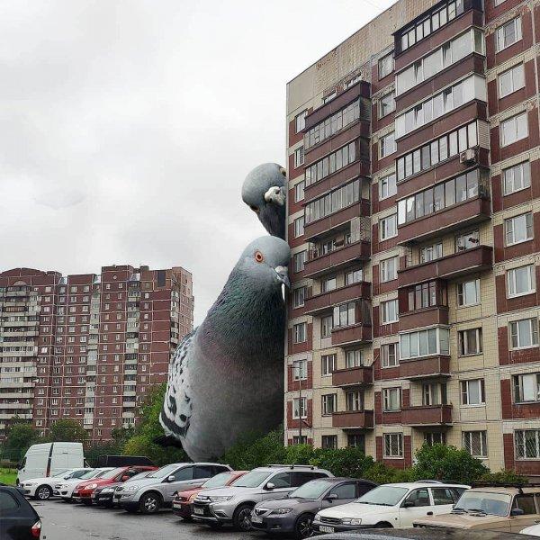 И голубь огромный нам смотрит в окно